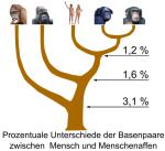 HomoSapiens @ wikipedia.org © Kuebi = Armin Kübelbeck