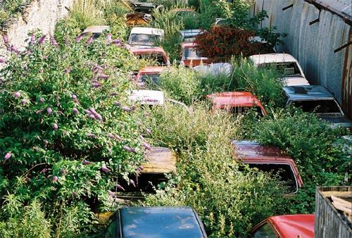 car-dump @ allamericanpatriots.com © larsomat