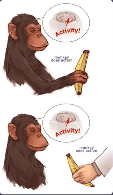 monkeysee @ student.biology.arizona.edu © Min Wang